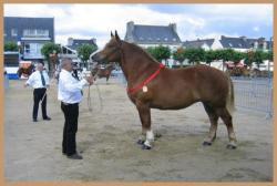 cheval posé.jpg