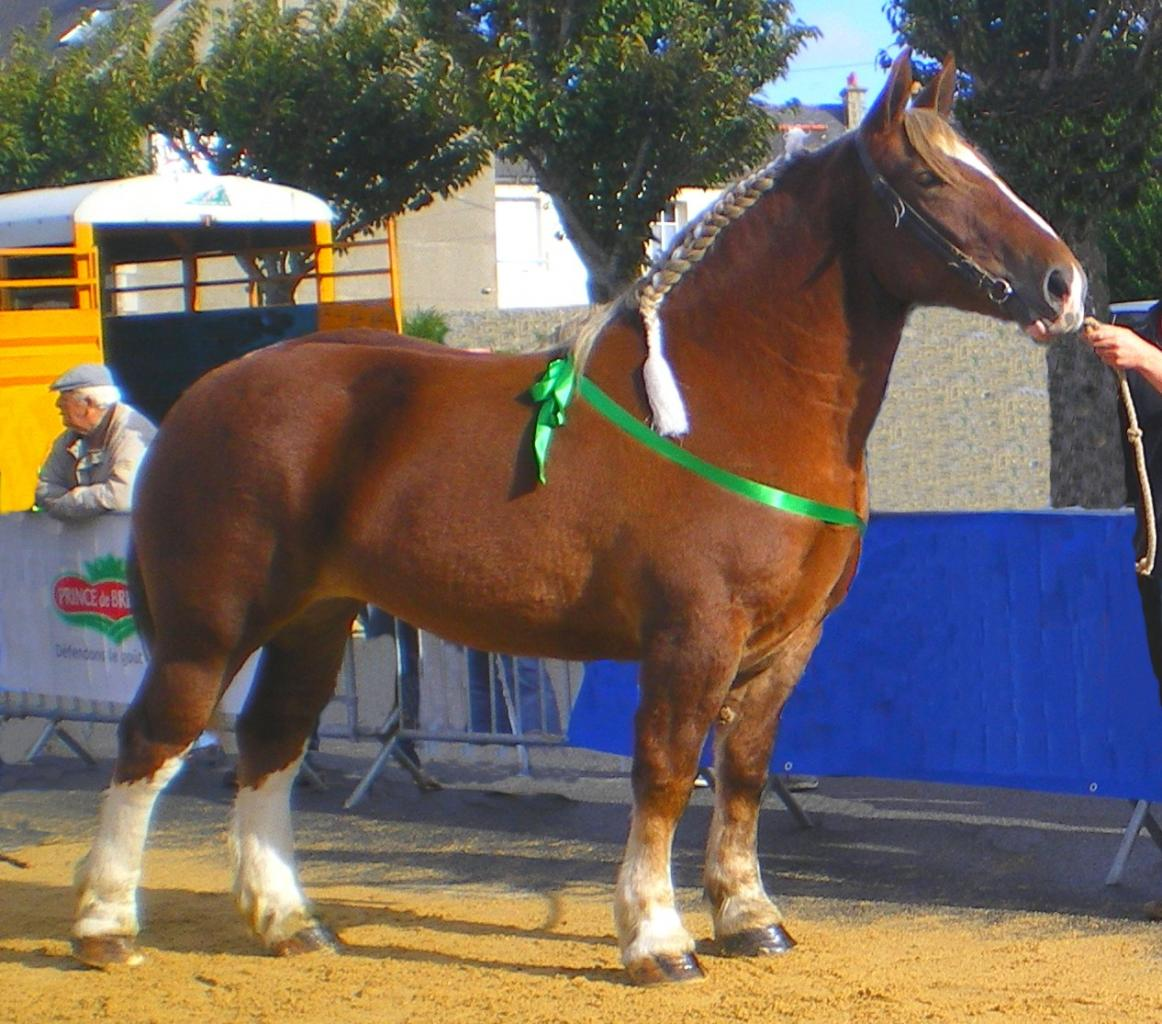 cheval de trait expression