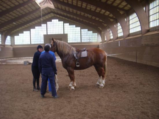 cheval tenu