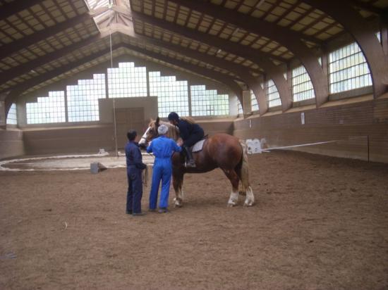 un cavalier sur le dos
