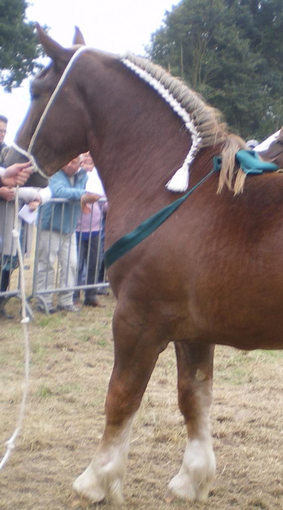 cheval de trait de peu de valeur
